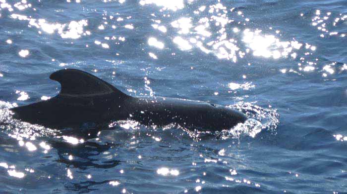 Экскурсия Наблюдение за дельфинами и китами в катамаран