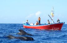 Наблюдение за китами на острове ла гомера